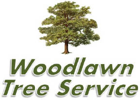 Woodlawn Tree Service serving Northern VA.